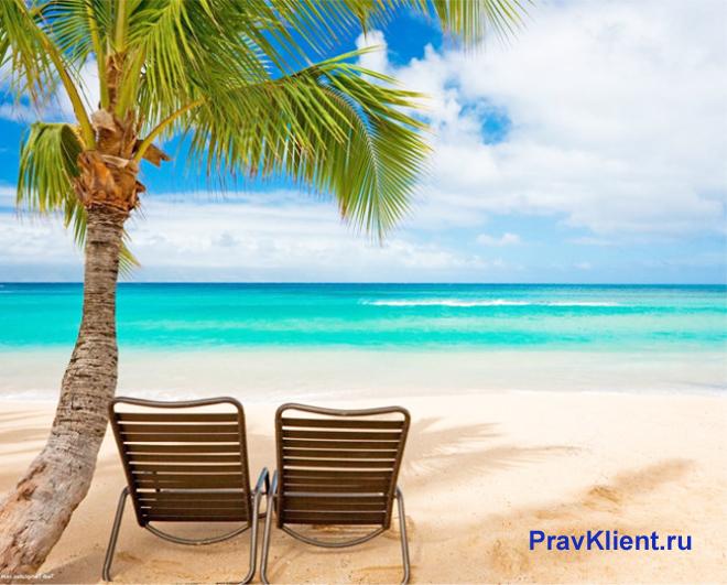 Берег моря, два лежака, пальма